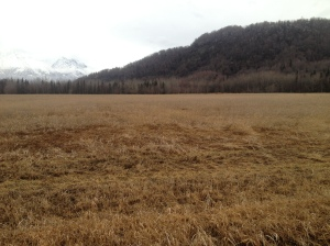A photo of a snow-barren field in the Mat-Su Valley this week highlights the current fire danger in the area.