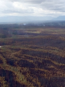 The Chisana River 2 Fire burns Friday, June 12, 2015, 20 miles south of the Alaska Highway near the Canadian border. The fire is currently burning in a limited protection area of the Wrangell-St. Elias National Park and Preserve and the Tetlin National Wildlife Refuge.  Jerry Hill/Tetlin National Wildlife Refuge