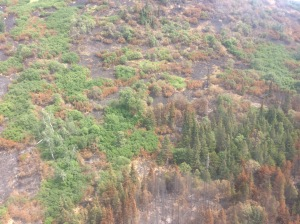 Juneau Lake Fire burned unevenly, as the mottling shows here. (Chugach National Forest/Steve H.)