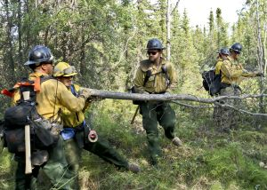 Coronados clear fuels around Northway-Tok Area Fires july 10 2015