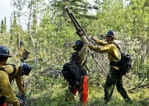 Coronados wrestle tree branches arund Northway Tok Area Fires July 10 2015