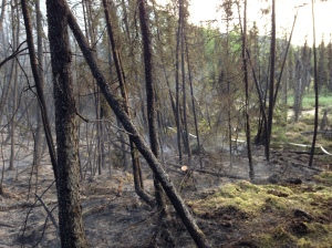 The aftermath of the 25-acre Hiland Fire near Eagle River. Photo by Renette Saba/Alaska Division of Forestry