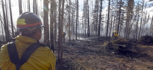Fairbanks #1 crew boss Kias Peter keeps an eye on his crew as they mop up along the perimeter of the Tetlin River Fire on Monday, June 20, 2016. Photo by Sam Harrel/Alaska Division of Forestry
