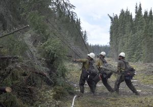Members of the White Mountain Type 2 Initial Attack crew clear a 40 foot wide indirect line on the Tetlin River Fire on Thursday, June 24, 2016. The clearing works as a fire break for firefighting efforts.  Photo by Sam Harrel/Alaska Division of Forestry