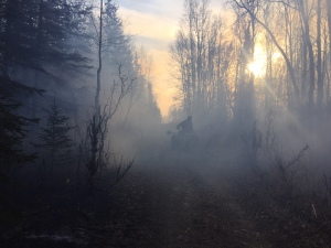 A firefighter on a four-wheeler drives down a trail while patrolling the Moose Creek Fire on Sunday, Oct. 16. Photo by Sarah Saarloos/Alaska Division of Forestry