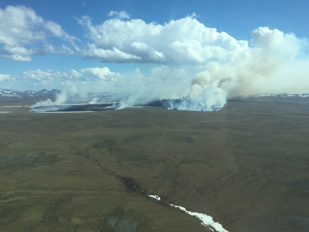 The Tusikpak Lake Fire (#116) is burning through tundra grass about 16 miles east of Point Hope. It was estimated at 2,000 acres as of Monday afternoon. Photo by Ryan McPherson, BLM AFS