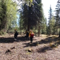 Photo of three firefighters walking a protection line constructed in the Richardson Clearwater community north of the Oregon Lakes Fire on June 3, 2019.