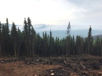 This is part of the 4.5-mile saw line that firefighters have cut around the Caribou Creek Fire burning east of Fairbanks and north of Two Rivers. Photo by Thomas Krock/Alaska Division of Forestry