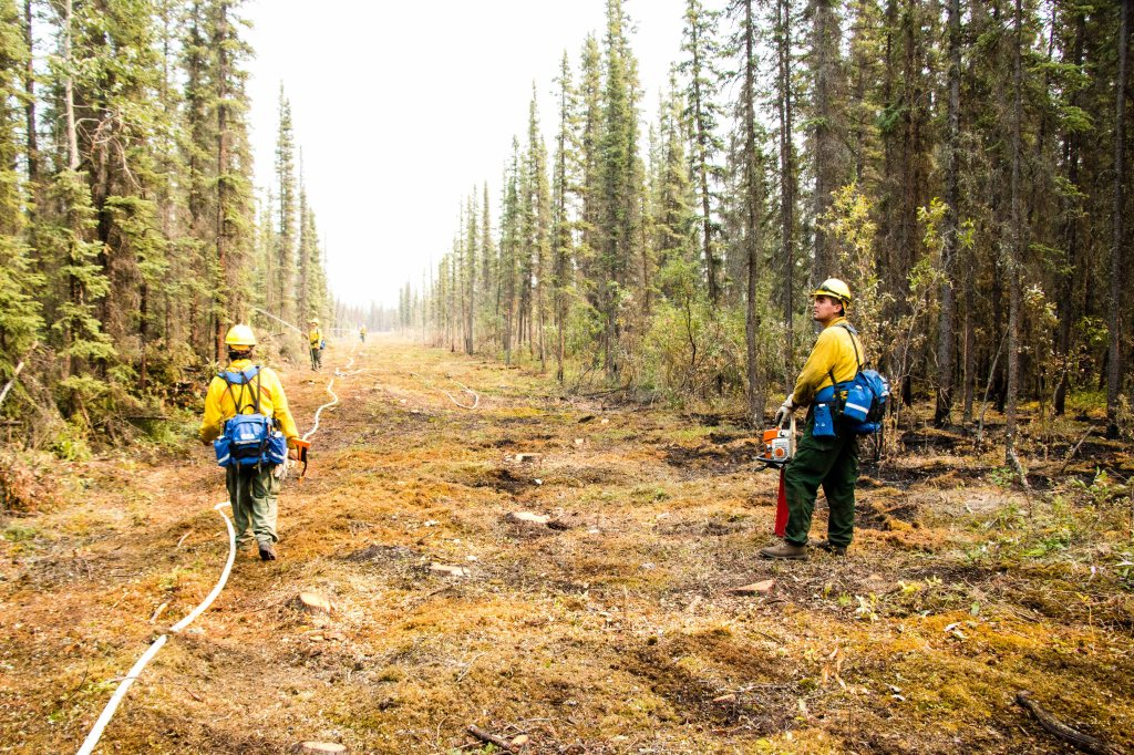 Firefighters from the Yukon Flats Type 2 Emergency Firefighter Crew work inside a saw line that is designed to help protect allotments from the Chandalar River Fire. Hoses have been laid inside the saw line as well. PHOTO: Beth Ipsen/BLM Alaska Fire Service