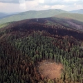 The burn scar of the Caribou Creek Fire as seen on Saturday, July 13, 2019 in this photo taken by incident commander Thomas Krock as he flew off the fire. The bare circle in the bottom of the photo is a helicopter landing zone that was cut out by firefighters. Photo by Thomas Krock/Alaska Division of Forestry