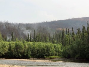 Light smoke from the Nugget Creek Fire burning in the Chena River State Recreation Area rises near the Chena River along Chena Hot Springs Road on Tuesday, July 2, 2019. Photo by Meg Cicciarella/Alaska Division of Forestry
