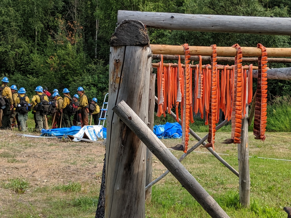 King salmon drying in fire camp.