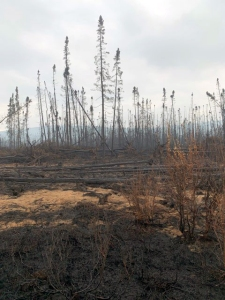 This picture of the Rainbow 2 Fire northwest of Delta Junction was taken from the Delta Logging Road on Tuesday, July 16, 2019. The fire cwas pushed north across the logging road on Thursday by strong winds. Photo by Mike Goyette/Alaska Division of Forestry
