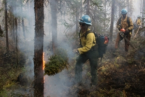 A member of the Prineville Hotshots swats flames with a spruce bough on the Deshka Landing Fire on Thursday, August 22, 2019. Photo by Mike McMillan/Alaska Division of Forestry