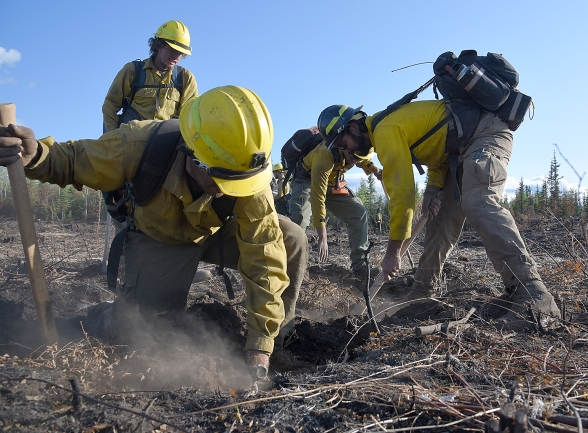 Members of the Missouri_Iowa Coordination Center #3 Type 2 Initial Attack Crew dig into the peat looking for heat as they cold trail the Small Timber Fire (#687) of the Chalkyitsik Complex on Sunday, Aug. 4, 2019. The 34-acre fire is holding heat in the deep layers of peat along the Draanjik River due to the extreme drought conditions the area has experienced this season. Sam Harrel/Alaska Interagency Incident Management Team