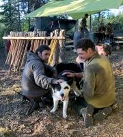 Firefighters petting Karelian bear dogs