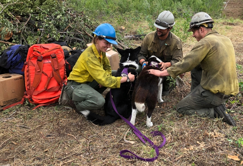 Firefighters petting Karelian bear dogs