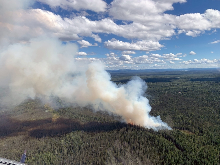 A smoke column rising from a wildfire in aspruce forest