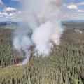 Smoke rising from a wildfire in a spruce forest.