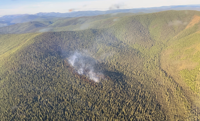 A small amount of smoke rises from a fire on a hillside in dense black spruce.