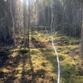 A photo white fire hose in the forest