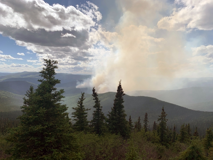 Smoke rises from the Munson Creek Fire with spruce trees in the foreground.