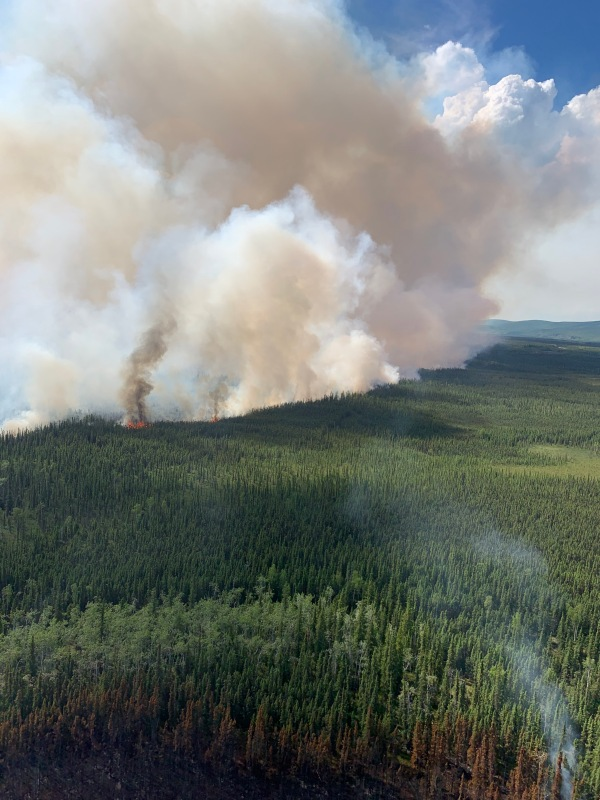 Smoke billowing from a fire burning a green forest.