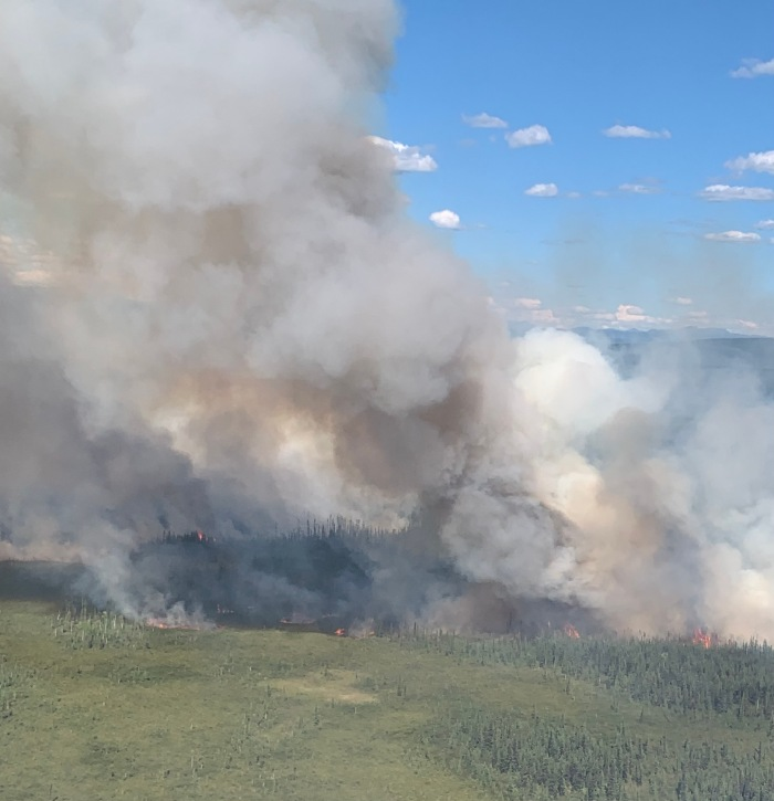 Billowing smoke rising up from a ground fire burning through black spruce trees.