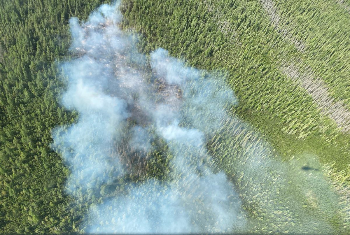 Smoke rising up from a burning patch of forest.