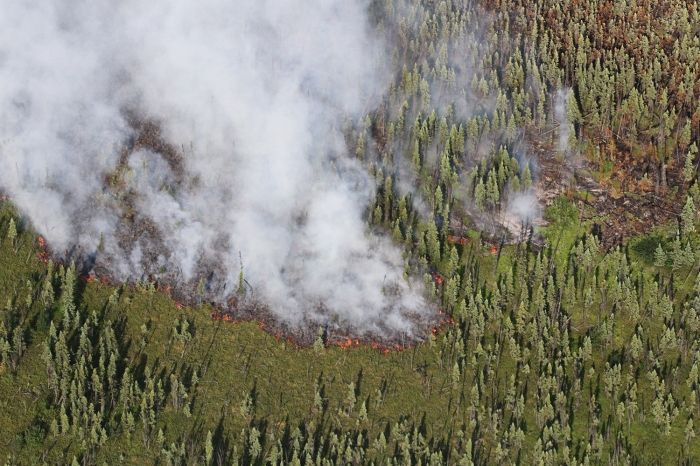 Smoke rises from a wildfire burning through black spruce.