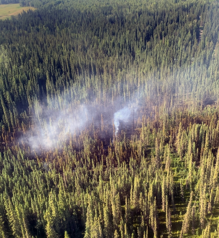 Wisps of smoke rise from a fire in a spruce forest.