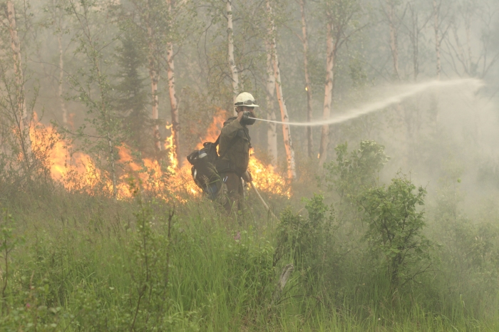 A firefighter sprays water on unburned vegetation with flames from a backfire behind him.