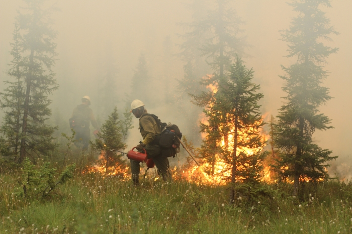 Firefighters use drip torches to ignite vegetation as part of a backburn.