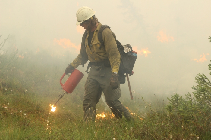 A member of the White Mountain Crew uses a drip troch to ignite vegetation along a road east of Chena Hot Springs Resort during a backburn conducted on Monday evening, July 5, 2021 to burn out fuel in front of the Munson Creek Fire burning behind the resort. Mike McMillan/Alaska DNR-Division of Forestry