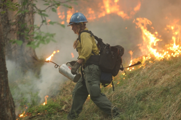 A member of the UAF Nanooks Fire Crew uses a drip torch to ignite vegetation along a road east of Chena Hot Springs Resort during a backburn conducted on Monday evening, July 5, 2021 to burn out fuel in front of the Munson Creek Fire burning behind the resort. Mike McMillan/Alaska DNR-Division of Forestry