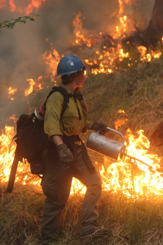 A member of the UAF Nanooks Fire Crew uses a drip torch to ignite vegetation along a road east of Chena Hot Springs Resort during a backburn conducted on Monday evening, July 5, 2021 to burn out fuel in front of the Munson Creek Fire burning behind the resort.