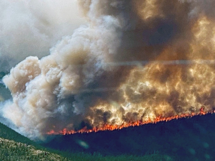 A line of flams burning through black spruce with a huge smoke column rising above the flames.