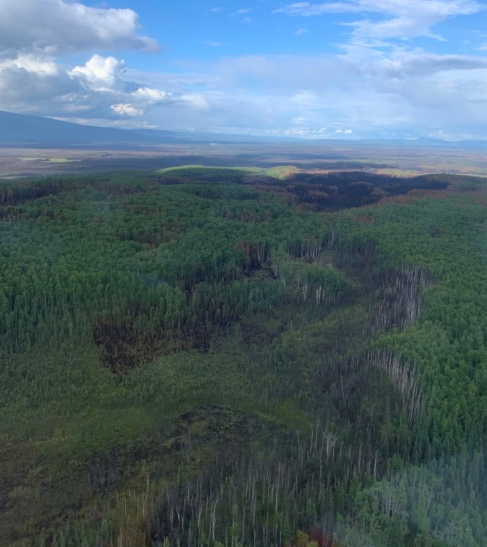 Forested area with a few black burned areas.