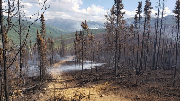 A picture of a trail through burned forest with green hills in the distance.