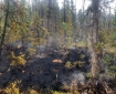 A burned patch of woods with wisps of smoke showing.
