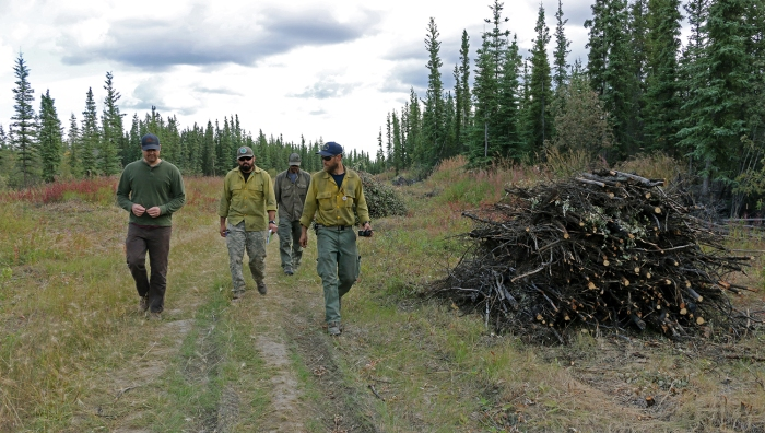 Four firefighters walking along a two-track road next to a woody debris pile.