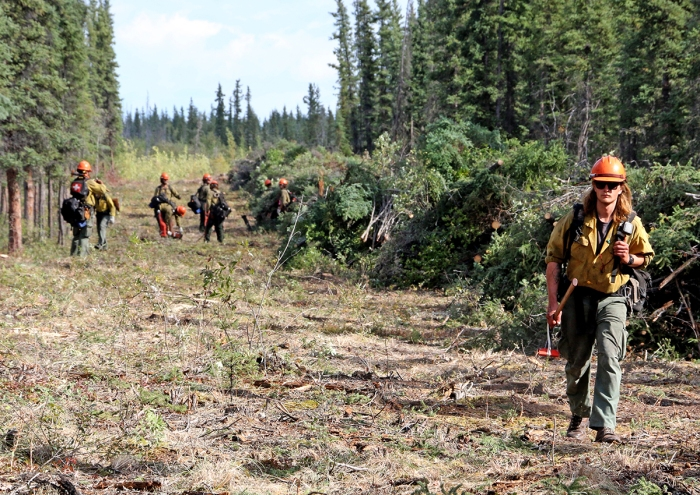 A firefighter walks a line in the forest cut by firefighters walking behind him.
